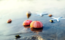Sea Urchin Shells On Wet Sand ...