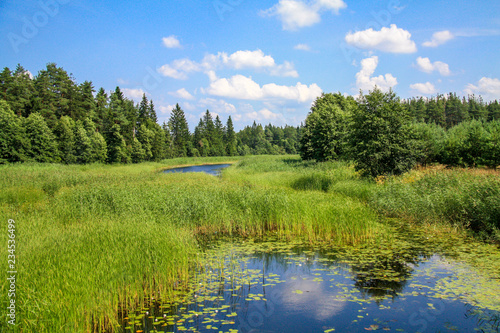 Fototapeta The river rushes through the reed field to the forest, and its water reflects the white clouds obraz na płótnie