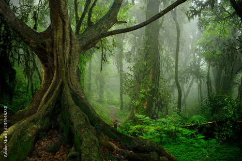 Photo Stands Road in forest Asian tropical rainforest