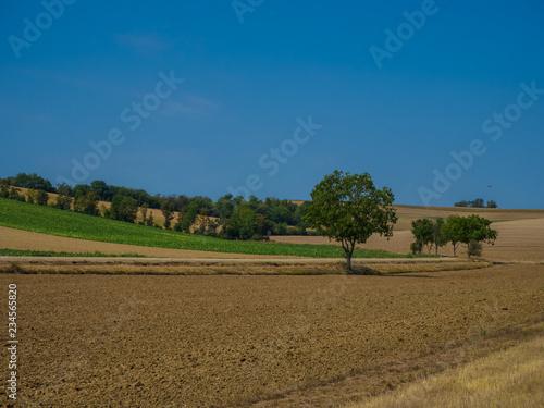 Poster Landschap Landscape agriculture fields