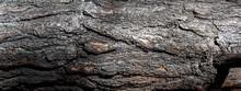 Fragment Of Burnt Pine Trunk, Banner,