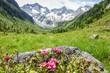 Landschaft in den Alpen in Tirol