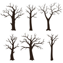 Set Of Bare Tree Silhouettes With Leafless Branches Isolated On A White Background.