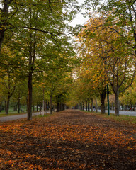 Autumn leaves on the Prater Hauptallee in Vienna