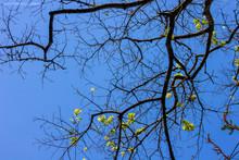 Arvore Céu Azul Folha Flores