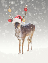 Christmas Reindeer In Snow With Santa Hat