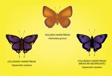 Butterfly Hairstreak Set Vector Illustration