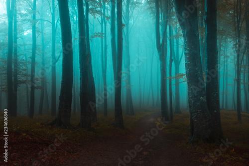 Foto auf Acrylglas Wald im Nebel Fairy tale light in foggy forest. Blue mist through the trees