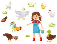 Flat Vector Set Of Farm Birds, Little Girl With Bucket Of Grain. Child Feeding Domestic Fowl. Poultry Farming