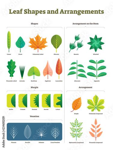 Photo Leaf shapes complex vector illustration