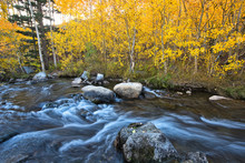 Fall Colors At Bishop Rock Creek
