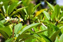 Goa Gajah Blume