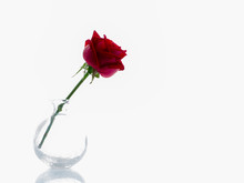 Single Red Rose In A Glass Vas...