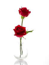 Two Red Roses In A Glass Vase On White