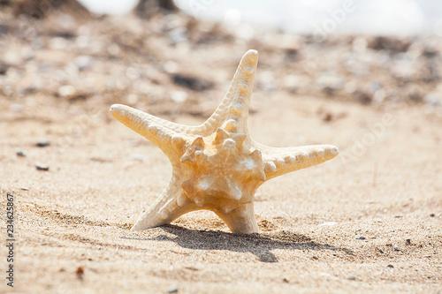 Fotografie, Obraz  deniz yıldızı