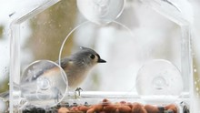 Slow Motion Of Two Titmouse Birds, Titmice, Perched On Plastic Window Feeder Perch, Fighting, Showing Aggression, Flying Away, House Finch, Snow, Snowing, Winter Snowstorm, Virginia