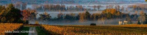Foto auf Leinwand Landschaft Sunset landscape and smog in bordeaux wineyard france, europe