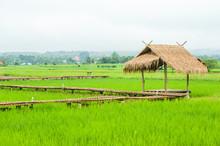 Green Rice Field In Pua, Nan P...