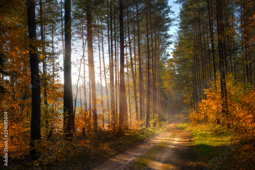 Foto auf Gartenposter Wald Road through the autumn forest. Masuria, Poland.