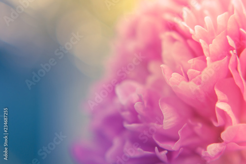 Pinturas sobre lienzo  Blurred delicate petals of a pink peony