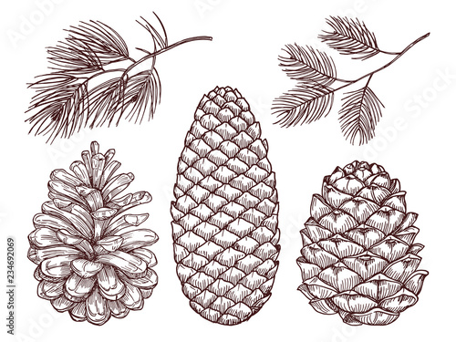 Obraz Hand drawn forest vector elements. Sketched pine branches and pinecones isolated on white background illustration - fototapety do salonu
