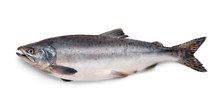 Fresh Atlantic Salmon Fish
