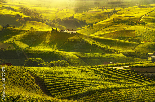 Poster Miel Langhe vineyards sunset panorama, Barolo, Piedmont, Italy Europe.