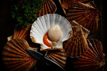 Fresh Scallops In The Shell To...