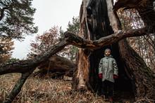Man Child Standing Inside A Tree Trunk