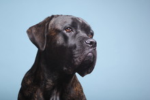 Beautiful Dog In Front Of A Colored Background
