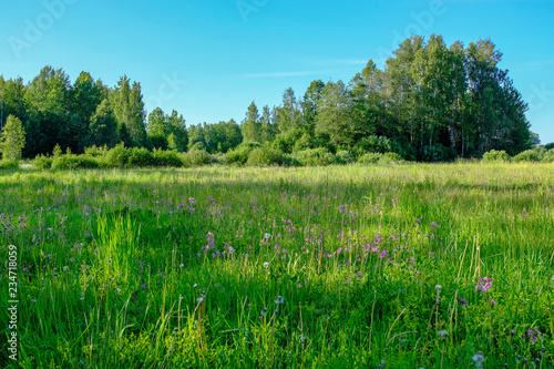 beautiful green meadow with summer flowers near forest in warm summer day