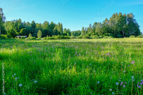 Foto op Plexiglas Groene beautiful green meadow with summer flowers near forest in warm summer day