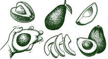 Vector Hand Drawn Avocado Set....