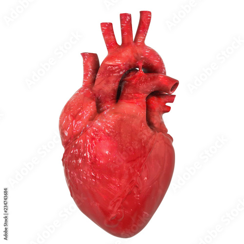 Realistic human heart organ with aorta and arteries, 3D rendering Fototapeta