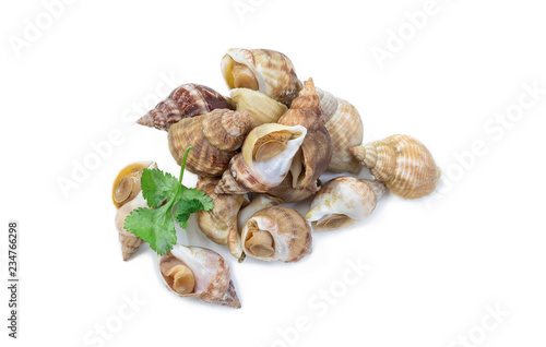 Photo Uncooked fresh common whelks or sea snails isolated on a white studio background