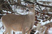 Lynde Shores Deer Pt 3