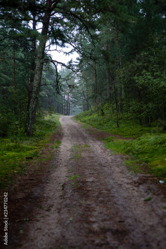 Tuinposter Weg in bos simple countryside forest road in perspective