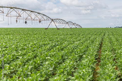 Fotografie, Obraz  Plantação de Soja no Centro-Oeste brasileiro irrigado artificialmente com Pivô C