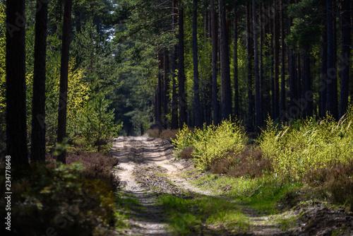Foto op Plexiglas Landschappen simple countryside forest road in perspective
