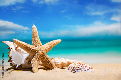 Fototapeta  seashells by the sea. beach holiday. beautiful summer background