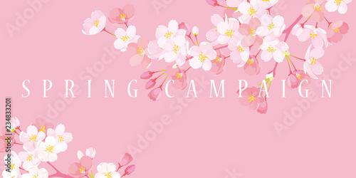 桜 スプリングキャンペーン イラスト - 234833201