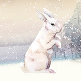 Wild white rabbit in a winter wonderland painted by watercolor vector - 234837659