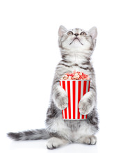 Funny Kitten With Popcorn Look...