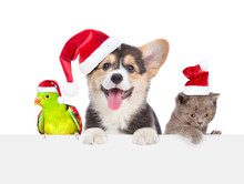 Group Of Pets In Red Christmas Hats Above Empty White Board. Isolated On White Background. Empty Space For Text