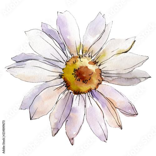 Canvas Print Daisy flower