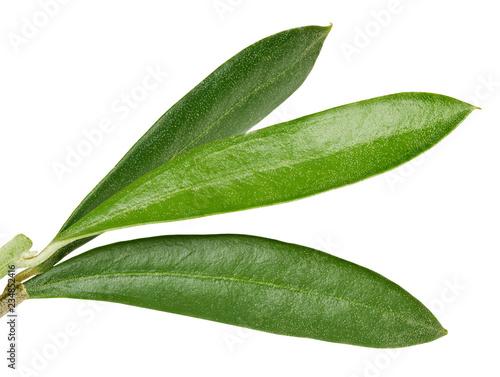 Fototapeta Olive leaves isolated on white obraz na płótnie