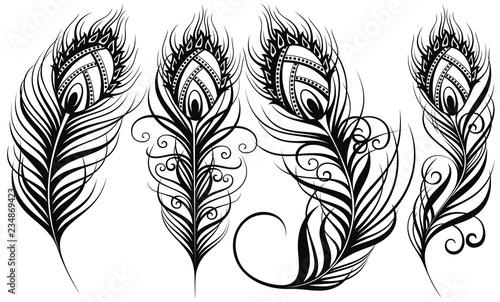 Pawie pióra. Egzotyczne pióra ptaków