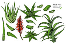 Hand Drawn Set Of Aloe Vera. Engraved Colored Vector Illustration. Medical, Cosmetic Plant. Moisturizing Serum, Healthcare. For Cosmetics, Medicine, Treating, Aromatherapy Package Design Skincare
