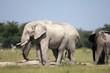 Botswana Tiere Natur Afrika