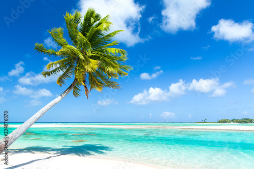 Fototapeta travel, seascape and nature concept - tropical beach with palm tree in french po